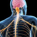 880 Central nervous system vascular malformations