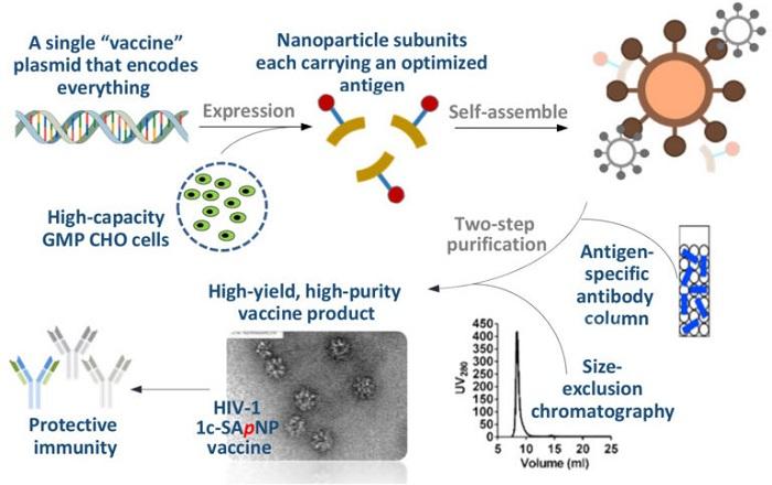 2488 Nanoparticle vaccine for COVID-19