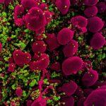 2455 New virtual screening strategy identifies existing drug that inhibits COVID-19 virus