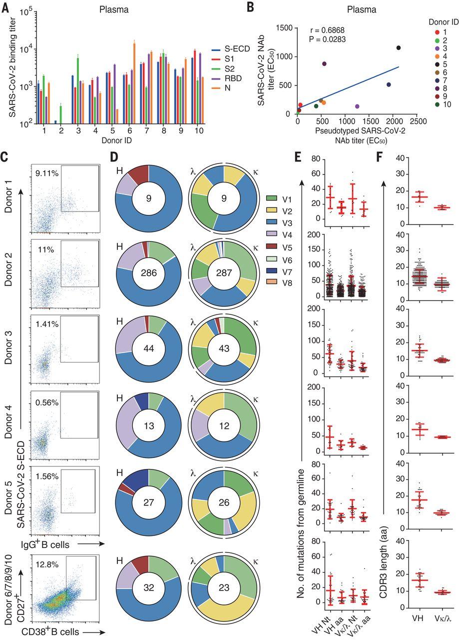 2596 Novel neutralizing antibodies targeting SARS-CoV-2 N-terminal domain discovered
